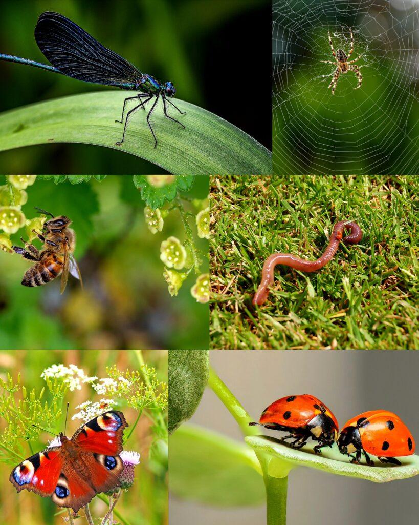 projekt badawczy owady