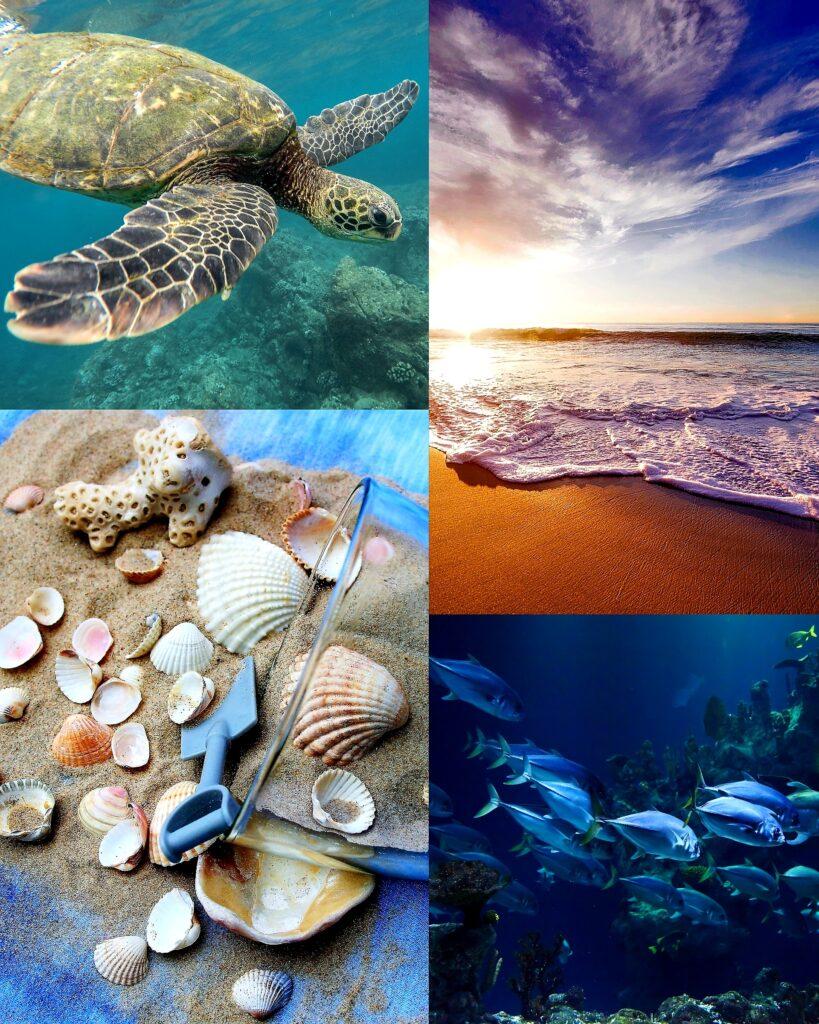 temat morze żłobek